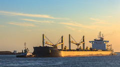 Tug-boats and vessel (tribsa2) Tags: nederlandvandaag marculescueugendreamsoflightportal pier vessel vrachtschip schip ship tugboat