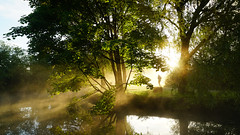 Running into the Sun (Mark BJ) Tags: daisynook countrypark failsworth manchester jogger runner sunrise canal hollinwoodcanal tree mist sun shine reflection flare oldham mistoverwater uk