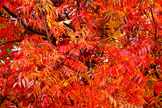 Autumn Fire_PB_5010