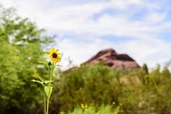 standing tall (jojoannabanana) Tags: arizona bloom bluesky bokeh clouds desertbotanicalgarden flower green nature landscape trees