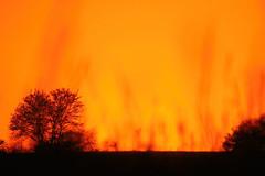 on fire... (tdwrsa) Tags: canoneos70d tamronsp150600mmf563divcusda011 rietvleinaturereserve sunrise flames