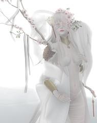 フルーツ ~Blog Post (Normajean Rae) Tags: cureless barberyumyum 6doo maitreya aii aisling mays soul evermore white crow konpeitou moon elixir kawaii elf cute 3d avatar secondlife second life albino sakura