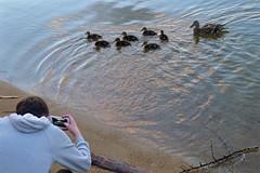 Wish I'd taken that (jasbond007) Tags: wishidtakenthat duck mallard penticton britishcolumbia canada panasonic dmclx5 lx5 jasbond007 nigeldawson copyrightnigeldawson2017