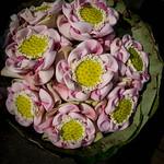 Lotus, marché aux fleurs, Bangkok thumbnail