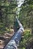 Penstock (jc nadeau) Tags: jasper alberta canada dam hydroelectric hydro atco astoria river rocky mountain electric national park athabaska rivers penstock pipe