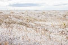 IMG_7901 (Islandsmjoll.is) Tags: breiðavík fókus fókusferð1214mai2017 garðar iceland island kollavík látrabjarg patreksfjörður patró rauðisandur reiðskörðábárðaströnd vesturland beautiful dásamlegt fallegt landskape landslag lighthouse skeljar vestfirðið viti wwwislandmjollis