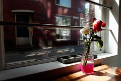 la pausa (robbi falz) Tags: pentax k30 tamron lunch dinner bar restaurant colazione pranzo fiori flowers relax rose