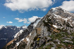 trees no more (bkellerstrass) Tags: watzmann alpen alps felsen blume