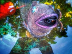 The Magic Fish (ThePolaroidGuy [CensoredϟRestricted]) Tags: fish sarasota florida sarasotaflorida water reflection availablelight naturallight daylight colors fountain ed edward drake edwarddrake masterphotographer my3rdeye magic h2o thepolaroidguy 2017 surreal edwarddrakemfa wet
