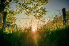 Warm (marco soraperra) Tags: sun light sunlight warm yellow color colorful sunset grass natuer tree summer nikon nikkor sky leaves green verde blue