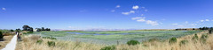 Baylands Nature Preserve, June 2017 #2 (satoshikom) Tags: panasonicdmczs100 panorama paloalto baylandsnaturepreserve shorelinepark weekend cycling byxbeepark