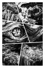 Wooden-6 (mobileimpulse) Tags: baumstamm baum iphone natur trockenholz holz wood collage schwarzweis sw bw iphoneography blackandwhite