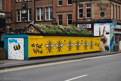 No Fear Here. . . (Last post for a week now. i will be offline mostly) (Snipsnapper. May i thank anyone who takes the time) Tags: bee manchester worker workerbee buzz streetart urban urbanart roofgarden livingroof nofearhere n4 nq