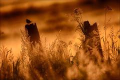 Grassenfamilie (maartenappel) Tags: grassen kleuren licht zon canon a