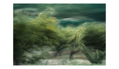 S / T (creonte05) Tags: eduardomiranda explore nikon d7100 2017 chile flickr verde green nature naturaleza blur icm arbol wind viento