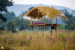 Machan...the elevated hut (Satyajeet Sahu) Tags: machan hut chhattisgarh barnavapara fields canon eos 600d 55250mm landscape zoom telephoto nature farmers india forest tourism travel raipur