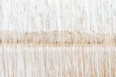 Reedview (pni) Tags: reed töölönlahti tölöviken water multiexposure multipleexposure tripleexposure building helsinki helsingfors finland suomi pekkanikrus skrubu pni