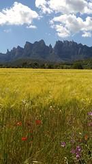Montserrat Nord