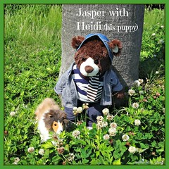 Jasper is smiling with Heidi (his Collie female puppy). (martian cat) Tags: ribbet macro teddybearsinjapan© ©martiancatinjapan ©teddybearsinjapan allrightsreserved© teddybearsinjapan teddybearsinjapan☺ ☺teddybearsinjapan ©allrightsreserved martiancatinjapan© teddybear teddybears collectibles hobbies ☺dogsandpuppiesinjapan ©dogsandpuppiesinjapan dogsandpuppiesinjapan© dogsandpuppiesinjapan ©puppydogsinjapan puppydogsinjapan© puppydogsinjapan ☺allrightsreserved allrightsreserved motivationalposter motivational caption captioncollection ☺martiancatinjapan martiancat martiancat© ©martiancat martiancatinjapan creativity