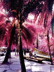ideal (meeeeeeeeeel) Tags: brazil brasil iphone iphoneography ensolarado sol sunny arvores trees vintiqueapp vintique pinkleaves surrealnature naturezasurreal natureza parque nature inhotim park outside outdoors surrealcolors surreal rose corderosa rosa pink