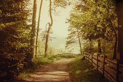enchanted forest (clo dallas) Tags: bosco wald enchanted forest lanscape paesaggio trees mountain montagna sentiero path foliage fogliame spring primavera nature sony 35mm flare soleggiato sunny forestaincantata italy 7dwf