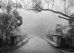 Leura, Blue Mountains (Colin_Bates) Tags: leura blue mountains nsw fog foggy misty winters day