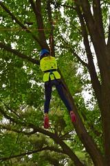 DSC_1263 (Montgomery Parks, MNCPPC) Tags: popupinmontgomeryparks bethesda treeclimbing climbatree tree climbingtrees kids children boys girls arborists elmstreeturbanpark spring may may2017 leaves treetrunks toddler