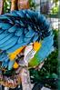 Colorful parrot (@Dpalichorov) Tags: bokeh blur parrot colorful blue green head animal bird beak neb nikond3200 nikon d3200 nib bill feather plume plumage coat feathering autofocus nikonflickraward