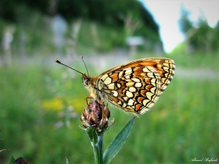 Butterfly 1324