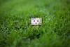 Danbo (Saxena, Anurag) Tags: canon outdoor grass green danbo toy miniature figurine nature