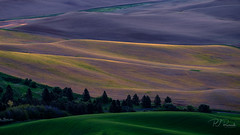 Palouse Color II (PJ Resnick) Tags: 2017 pjresnick palousewa perryjresnick pjresnickgmailcom pjresnickphotographygmailcom ©2017pjresnick ©pjresnick nature light fuji fujifilm atmosphere atmospheric digital shadow texture shadows yellow angle perspective naturallight xf fujinon resnick outdoor green brown orange rectangle rectangular color colour sky blue xpro2 fujifilmxpro2 landscape washington filmsimulation fujinon55200mm 55200mm provia pink sunrise purple 16x9