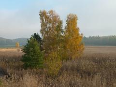 There Are Places 3 (Lars Nordström) Tags: mist autumn larsnordström
