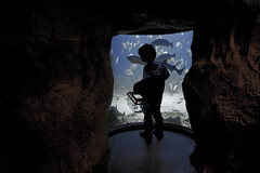 Sueños (DE CABRA) Tags: water boy agua fishes dreams sueños acuarium