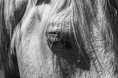 Black Look   ///   Mirada Negra (Walimai.photo) Tags: granadilla caballo horse mirada look black white blanco negro byn bw branco preto blanc noir nikon d7000 helios 44m4 cáceres extremadura pueblo village spain