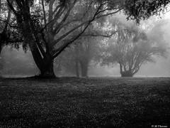Mysterious Times (Codex IV) Tags: baum fruehling land landscape landschaft nikond5300 schultheisweiher spring tamron240700 tree vegetation wiese nebelig