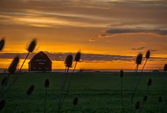 Crest View Farm (Knarr Gallery) Tags: barn farm sunset field rural nikon d300 18200mmf3556gvrii evening dusk thistles clouds ontario canada knarrgallery darylknarr knarrphotography