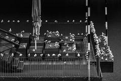 Alle Möwen sind schon da.... (tan.ja1212) Tags: möwen medienhafen düsseldorf wasser vögel plateau sitzplätze sonnenschirm treppe