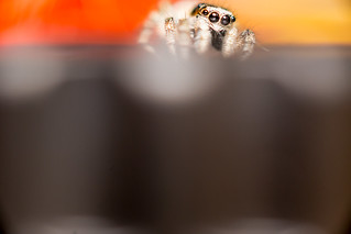 cutest Spider ever