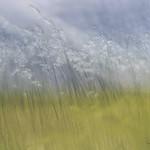 grasses of palouse thumbnail