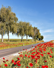 The red ditch (andreasrauschfotografie) Tags: street flowers ditch red landscape canondslr road
