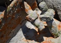 Nuts & Bolts (KaDeWeGirl) Tags: newyorkcity bronx pelhambaypark nuts bolts rust forgotten neglected abandoned washedup shadow light seaweed