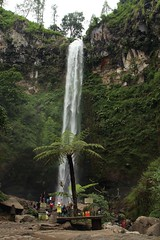 Coban Rondo ~ The Widow's Falls (Prayitno / Thank you for (12 millions +) view) Tags: konomark natural beauty beautiful waterfalls malang batu pujon east java jawa timur indonesia outdoor activity day time
