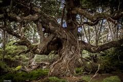 Kawau Island, New Zealand.  #outdoors #nature #adventure #tranquil #adventuring #nz #newzealand #earthpix #kiwi #nzmustdo #travel #tramping #forest #hotshots #naturalism #naturephotography #moss #hiking #trees #idyllic #happy #wild #natural #beautiful #sp (wesley307) Tags: beautiful natural naturephotography earthpix moss naturalism tramping outdoors forest trees happy kiwi nature adventure idyllic hiking wild tranquil nzmustdo nz newzealand adventuring spheratic hotshots travel