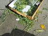 862 (en-ri) Tags: fiori flowers mimosa pacchetto sigarette sony sonysti bianco giallo daisy margherita scatola cartone box