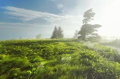 Misty Sunlight (R. Keith Clontz) Tags: grassyridge grassyridgebald morning sunlight misty clearingsky brightsunlight windblown winblowngrasses trees silhouettes fraserfir balsam roanmountain apalachiantrail rkeithclontz