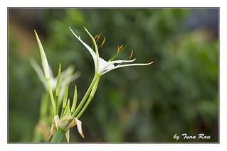 SHF_0428_Flowers