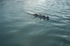 un quattro di coppia sul Tevere, Roma (Xavier de Jauréguiberry) Tags: italie italia italy latium lazio rome roma tibre tevere aviron canottaggio rowingboat quatredecouple quattrodicoppia quadscull quadruplescull 4x