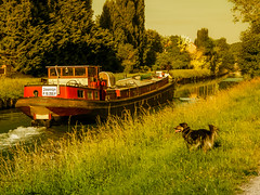 Border collie patrol on the canal ... (K r y s) Tags: france spring narrowboat eau extérieurs nature tricolore barge trees bordercollie 2017 canalbarge canalboat rhinebarge péniche dog outdoors printemps lisca canal attitude chien