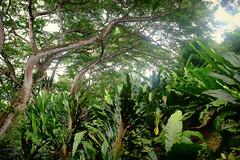 The perfect jungle (Studio 124) Tags: palauubin singapore wiechertvisser