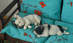 Have a nice friday! (air_dan) Tags: mr z french bulldog sleeping dog puppy puppies dogs
